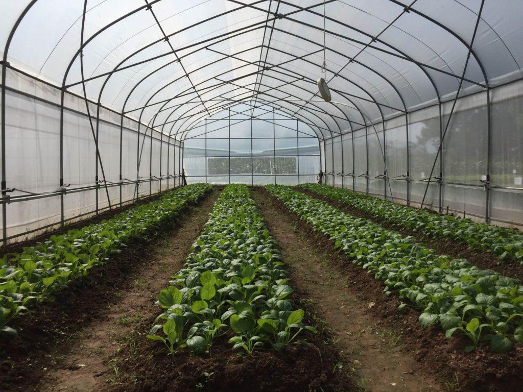 lưới che nắng trồng rau 01